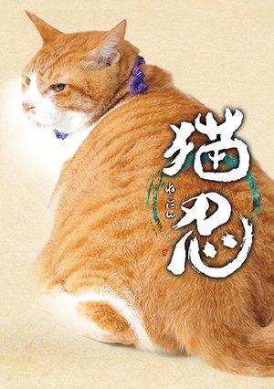 画像1: 送料無料!映画「猫忍」パンフレット+クリアファイルセット