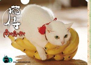 画像2: 送料無料!映画「猫侍 南の島へ行く」パンフレット+クリアファイルセット