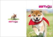 他の写真1: 送料無料!映画「幼獣マメシバ 望郷編」パンフレット+クリアファイルセット