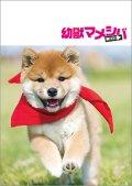 送料無料!映画「幼獣マメシバ 望郷編」パンフレット+クリアファイルセット
